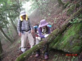 登山道遮蔽倒木