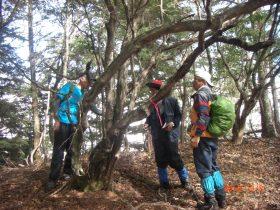 原生林でのサラサドウダン調査