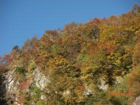 池の茶屋林道分岐点付近の紅葉